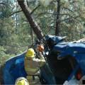 Hayfork Tree Wrap